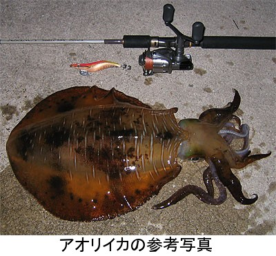 Aoriikasyukusyoumoji